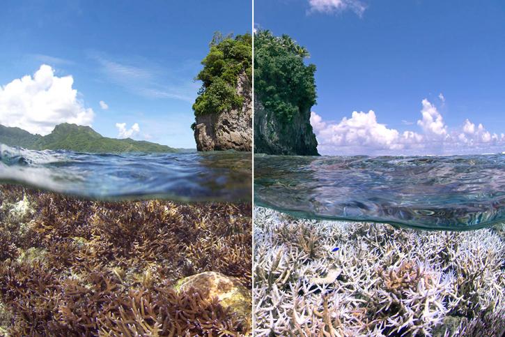 content_c1-Courtesy-of-The-Ocean-Agency---XL-Catlin-Seaview-Survey